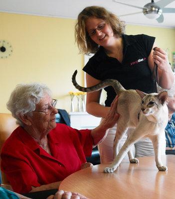 Activiteiten en therapie met huisdieren. Zorgdier.