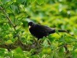 Bewegingssensor met vogelgeluiden - Natuurbeleefplek