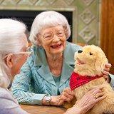 Knuffeldieren - Interactieve robot Hond - Speciaal voor ouderen_