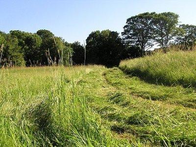 Bekende geur - Gemaaid gras