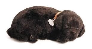 Knuffeldieren - Labrador chocolade kleur