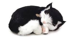 Knuffeldieren - Zwart-witte kat