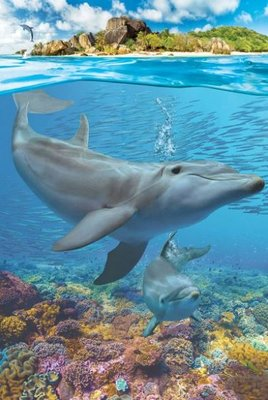 Puzzel - 250 XL stukjes - Dolfijn met jong