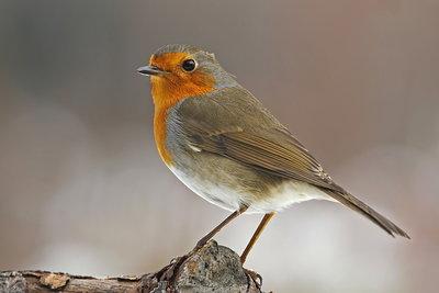Bewegingssensor - speelt vogelgeluidjes af in 'Natuur Beleefplek'