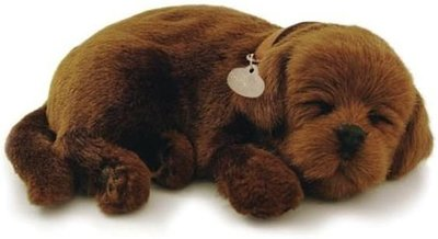 slapend hondje, labrador, chocola, ademt rustig
