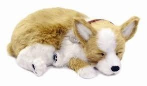 Knuffeldieren - Chihuahua