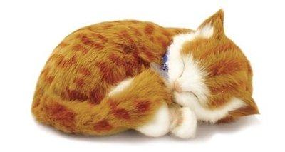 Knuffeldieren - Tijger kat